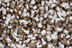 Fresh shiitake mushroom Stock Photos
