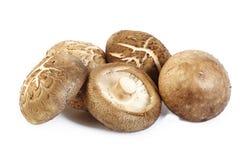 Fresh shiitake mushroom on white background. Fresh shiitake mushroom isolated on white background Royalty Free Stock Image
