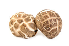 Fresh shiitake mushroom on white. Fresh shiitake mushroom isolated on white background Stock Images