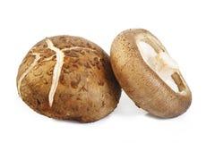 Fresh shiitake mushroom on white. Fresh shiitake mushroom isolated on white background Stock Photography
