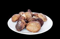 Fresh shiitake mushroom Stock Photography