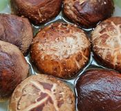 Fresh Shiitake Mushrooms or Lentinula Edodes Mushrooms Royalty Free Stock Photography