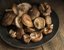 Fresh shiitake mushrooms in moody natural light setting with vin Stock Photos