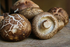 Fresh shiitake mushrooms on wooden background.healthy food. Mush. Rooms have the ability to boost the immune system Royalty Free Stock Photography