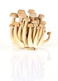 Fresh shimeji mushroom on white background. Fresh shimeji mushroom on a white background Royalty Free Stock Photos