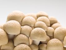 Fresh shimeji mushrooms Stock Photo