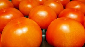 Fresh shiny ripe red tomato on a shelf in supermarket stock images