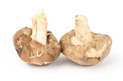 Fresh shitake mushroom. On white background Stock Image