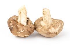 Fresh shitake mushroom Stock Image