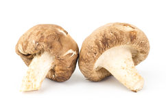 Fresh shitake mushroom. On white background Stock Photo