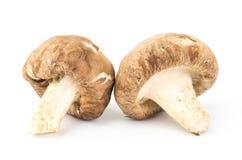 Fresh shitake mushroom Stock Photo