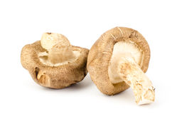 Fresh shitake mushroom. On white background Royalty Free Stock Photo