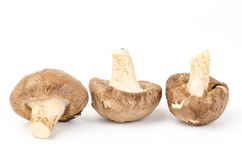 Fresh shitake mushroom. On white background Stock Images