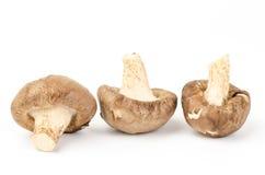 Fresh shitake mushroom Stock Images