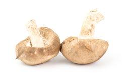 Fresh shitake mushroom Royalty Free Stock Photos