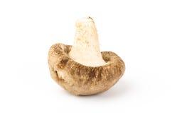 Fresh shitake mushroom Royalty Free Stock Photography