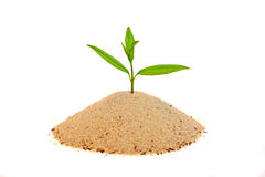 Fresh shoot. A young shoot grows out of a small pile of sand stock photo