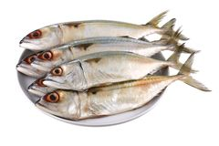 Fresh Short-bodied Mackerel Royalty Free Stock Images