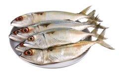 Fresh Short-bodied Mackerel Royalty Free Stock Images
