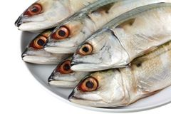 Fresh Short-bodied Mackerel Stock Image