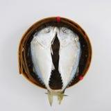 The fresh short mackerel fish (1). The fresh short mackerel fish in bamboo basket. (1 Royalty Free Stock Image