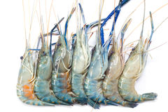 Fresh Shrimp. Closeup Useful as background for design-works Royalty Free Stock Image