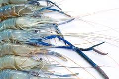 Fresh Shrimp. Closeup Useful as background for design-works Stock Image