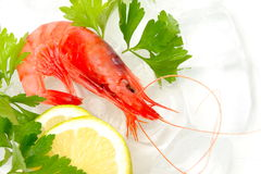 Fresh shrimp Stock Photography
