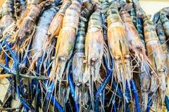 Fresh shrimp. Or big prawn Royalty Free Stock Image
