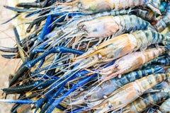 Fresh shrimp. Or big prawn Stock Images