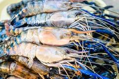Fresh shrimp. Or big prawn Stock Photography