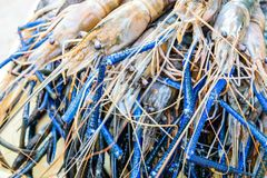 Fresh shrimp. Or big prawn Stock Photo