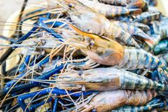 Fresh shrimp. Or big prawn Stock Image