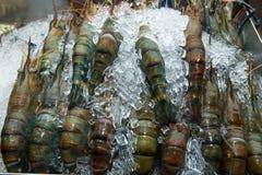 Fresh shrimp big size on the ice. At fresh market Stock Photography