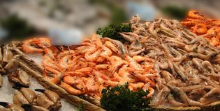 Fresh shrimp and calamari Royalty Free Stock Images