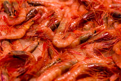 Fresh shrimp. Close up image of fresh shrimp in the Central Market of Valencia stock photos