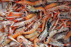 Fresh shrimp on fish market Stock Image