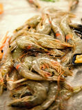 Fresh shrimp are frozen. For sale to cook. Stock Photography