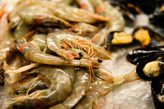 Fresh shrimp are frozen. For sale to cook. Stock Images