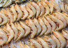 Fresh shrimp Stock Image