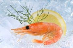 Fresh shrimp on ice Stock Images