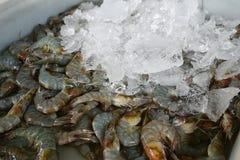 Fresh shrimp on ice Royalty Free Stock Photos
