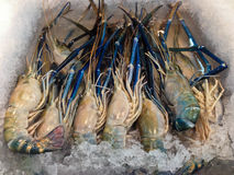 Fresh shrimp on ice at the market for sell Royalty Free Stock Photography