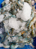 Fresh shrimp on ice. Fresh Prawns shrimp with ice at the market for sell Stock Photo