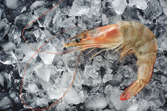 Fresh shrimp on ice. Stock Photo
