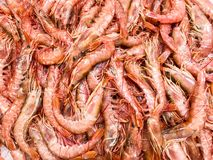 Fresh shrimp on ice stock images