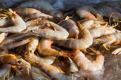 Fresh shrimp on ice Royalty Free Stock Images