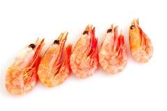 Fresh shrimp isolated Royalty Free Stock Photos