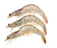 Fresh shrimp isolated Stock Images