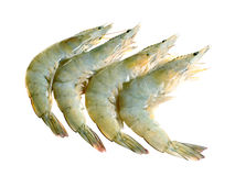 Fresh shrimp Stock Image